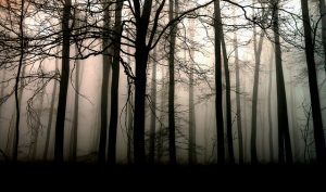 forest-547004_640
